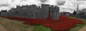 The Tower of London Poppys.jpg